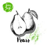 Hand drawn sketch pears composition. Group of whole and half fruits. Vitamin and healthy food vector. Illustration Stock Images