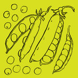 Hand drawn sketch peas Stock Photography