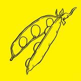 Hand drawn sketch peas Royalty Free Stock Photo