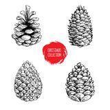 Hand drawn sketch pine cones set. Christmas collection isolated on white background.  Great for seasonal holiday decor and greetin. Hand drawn sketch pine cones Royalty Free Stock Photos