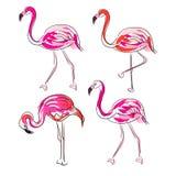 Hand drawn sketch pink flamingo vector set. Stock Photography