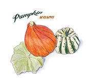 Hand drawn sketch of pumpkin Royalty Free Stock Image