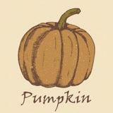 Hand drawn sketch pumpkin. Stock Photography