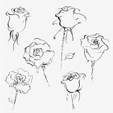Hand drawn  sketch of roses Royalty Free Stock Photo