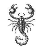 Hand drawn sketch of scorpion. Tattoo animal. Vector illustration. Sketch of scorpion. Tattoo animal. Vector illustration Royalty Free Stock Photo