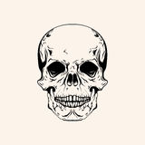 Hand drawn sketch scull tattoo line art. Vintage vector illustra Stock Image