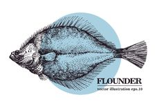 Hand drawn sketch seafood vector vintage illustration of flounder fish. Can be use for menu or packaging design. Engraved style. Retro illustration Royalty Free Stock Photo
