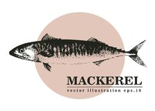 Hand drawn sketch seafood vector vintage illustration of mackerel fish. Can be use for menu or packaging design. Engraved style. Retro illustration Stock Photos