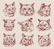 Hand drawn sketch set cats. vector illustration Royalty Free Stock Images