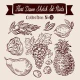 Hand drawn sketch set fruit. Vector illustration Stock Image