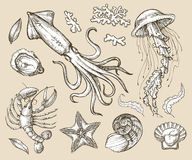 Hand drawn sketch set seafood, sea animals. Vector illustration Royalty Free Stock Image