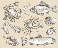 Hand drawn sketch set seafood. Vector illustration Royalty Free Stock Photo