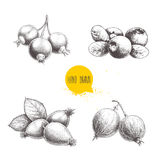Hand drawn sketch style berry set. Blueberry with leaf, rose hip branch with leafs, black or red currant and gooseberries. Royalty Free Stock Image