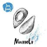 Hand drawn sketch style boiled fresh mussels. Seafood vector illustration. Poster for fish markets and restaurants menu Royalty Free Stock Images