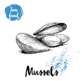 Hand drawn sketch style boiled fresh mussels. Seafood vector illustration poster. For fish markets and restaurants menu Royalty Free Stock Photo