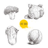 Hand drawn sketch style cabbages set. Cabbage head, cauliflower, broccoli and chinese cabbage pe-tsai. Organic fresh farm food Royalty Free Stock Photography
