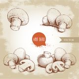 Hand drawn sketch style champignon mushroom composition set. Whole and slice cuts. Vector farm fresh food collection Royalty Free Stock Photos