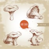 Hand drawn sketch style chanterelle mushroom set. Healthy natural forest food collection. Vector illustration Stock Images