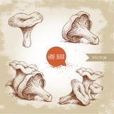 Hand drawn sketch style chanterelle mushroom set. Healthy natural forest food collection. Vector illustration  on old back Stock Photos