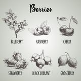 Hand drawn sketch style different berries set. Blueberry branch, raspberries, cherry, strawberry bunch, black currants and gooseb. Erries. Organic eco food vector illustration