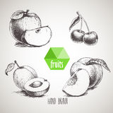 Hand drawn sketch style fruits set. Stock Images