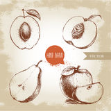 Hand drawn sketch style fruits set. Apricot, peach half with leaf, half pear, apples composition. Eco food vector illustration Royalty Free Stock Images
