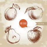 Hand drawn sketch style fruits set. Apricot, peach with leaf, half of pear and apple.  Stock Images
