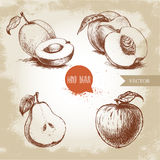 Hand drawn sketch style fruits set. Apricots, peaches , half pear, apple. Royalty Free Stock Photo