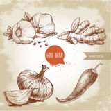 Hand drawn sketch style Garlics with black peppers, ginger root, onion and red hot chili pepper. Royalty Free Stock Photos