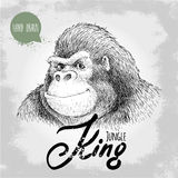 Hand drawn sketch style gorilla. Jungle King. Royalty Free Stock Images