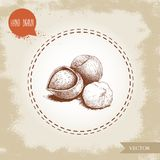 Hand drawn sketch style hazelnut group. Whole, cracked and seed. Eco forest nut filbert composition. Vector illustration Isolated on old background Stock Photo