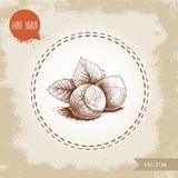 Hand drawn sketch style hazelnut group. Whole nuts with leaves. Eco forest nut filbert. Vector illustration. Isolated on old background Royalty Free Stock Photos