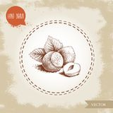 Hand drawn sketch style hazelnuts group with leaves. Eco forest nut filbert. Vector illustration. Isolated on old background Royalty Free Stock Image