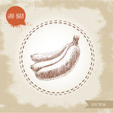 Hand drawn sketch style illustration of bunch of bananas Stock Photography
