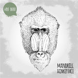 Hand drawn sketch style illustration of Mandrill male monkey face Royalty Free Stock Photography