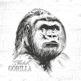 Hand drawn sketch style illustration of monkey face. Stock Photography