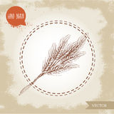 Hand drawn sketch style illustration of wheat sheaf. Royalty Free Stock Photography