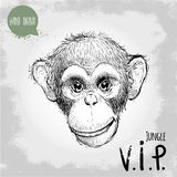 Hand drawn sketch style illustration of Young Chimpanzee monkey face Stock Image