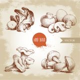 Hand drawn sketch style mushrooms compositions set. Champignon with cuts, oysters, chanterelles and porcini mushrooms. Organic eco raw food vector Stock Photo