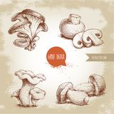 Hand drawn sketch style mushrooms compositions set. Champignon with cuts, oysters, chanterelles and porcini mushrooms. Organic eco raw food vector Stock Image