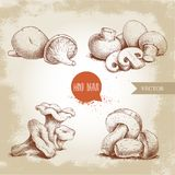 Hand drawn sketch style mushrooms compositions set. Champignon with cuts, oysters, chanterelles and porcini mushrooms. Organic eco raw food vector Royalty Free Stock Images