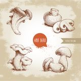 Hand drawn sketch style mushrooms compositions set. Champignon with cuts, oysters, chanterelles and porcini mushrooms. Organic eco raw food vector Stock Photography