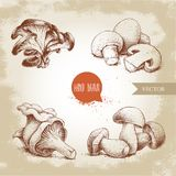 Hand drawn sketch style mushrooms compositions set. Champignon with half, oysters, chanterelles and porcini mushrooms. Organic eco raw food vector Stock Photo