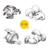Hand drawn sketch style mushrooms compositions set. Champignon with half, oysters, chanterelles and porcini mushrooms. Organic eco. Raw food vector Stock Images