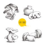 Hand drawn sketch style mushrooms compositions set. Champignon with slices, oysters, chanterelles and porcini mushrooms. Farm fres. H food vector illustrations Stock Image