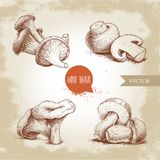 Hand drawn sketch style mushrooms compositions set. Champignons, oysters, chanterelles and porcini mushrooms. Organic eco raw food vector illustrations Stock Image