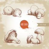 Hand drawn sketch style mushrooms compositions set. Champignons, oysters, chanterelles and porcini mushrooms. Organic eco raw food vector illustrations Royalty Free Stock Photos