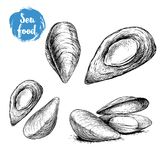 Hand drawn sketch style mussels set. Closed and opened. Fresh and cooked. Sea food vector illustration. Isolated on white background Royalty Free Stock Photography