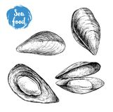 Hand drawn sketch style mussels set. Closed and opened. Sea food and sea animal vector illustration. Isolated on white background Royalty Free Stock Image