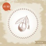 Hand drawn sketch style olive branch. Olive oil and healthy food vector illustration. On vintage looking background Royalty Free Stock Image